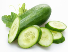 Fresh Cucumber Export Standard Price For Sale High Quality With Best Price For You