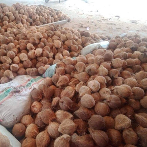 COCONUT EXPORT TO DUBAI