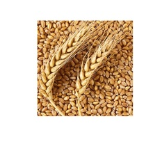 Wheat Grain For Sale