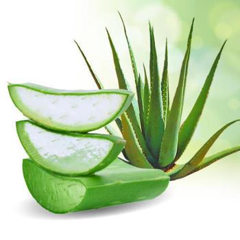 Aayuki Aloe Vera - Buy Aloe Vera Cultivation,Raw Aloe Vera,Sri Lanka Aloe  Vera Product on Alibaba.com