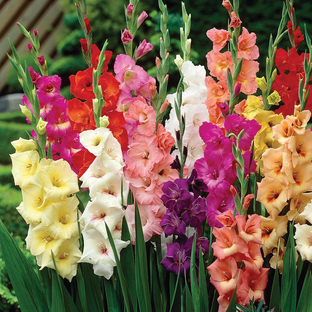 Где купить цветы гладиолусы в самаре