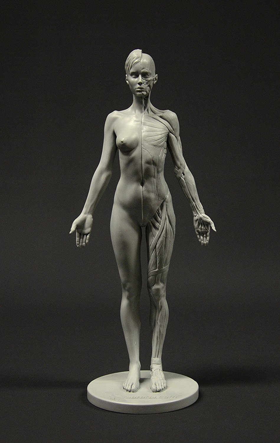 Cheap Anatomical Figure Find Anatomical Figure Deals On Line At