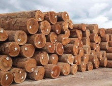 Black Walnut <span class=keywords><strong>Logs</strong></span>