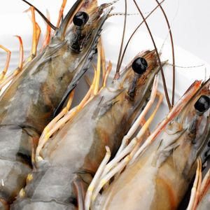 Eco-friendly Solution shrimp feed to degrade effluents and provide healthy environment
