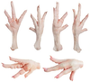 Frozen Chicken Feet, Paws, Wings, Legs, Gizzards, Whole 'A' Grade for Sale Cheap