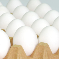 Premium Quality Chicken Eggs for Export Fresh Egg Specifications