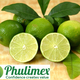 EXPORT LEMON WITHOUT SEEDS _PHULIMEX 0084 901445086