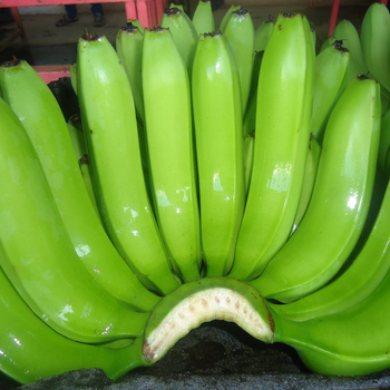 Best Price Fresh Cavendish Banana