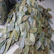 Dried Graviola Leaves without stem, pesticide free