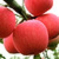 Fresh Red Fuji Apple 2018 wholesale