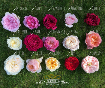david austin wedding roses buy cut roses from the david austin