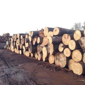 BEECH WOOD LOG LOW PRICES CUT FOR EXPORT FROM FOREST
