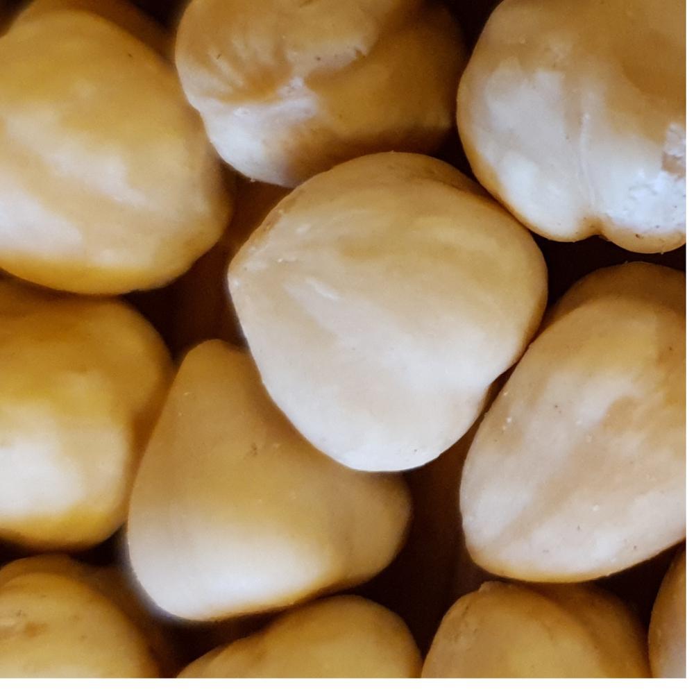 Hazelnut Roasted Orginal Turkish , Roasted , Organic , High Quality , Premium Selected
