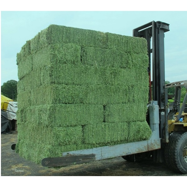 Alfalfa Hay For Animal Feeding At Wholesales Prices