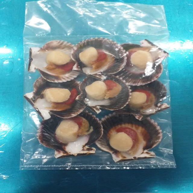Russian manufacturer frozen half shell peruvian scallop