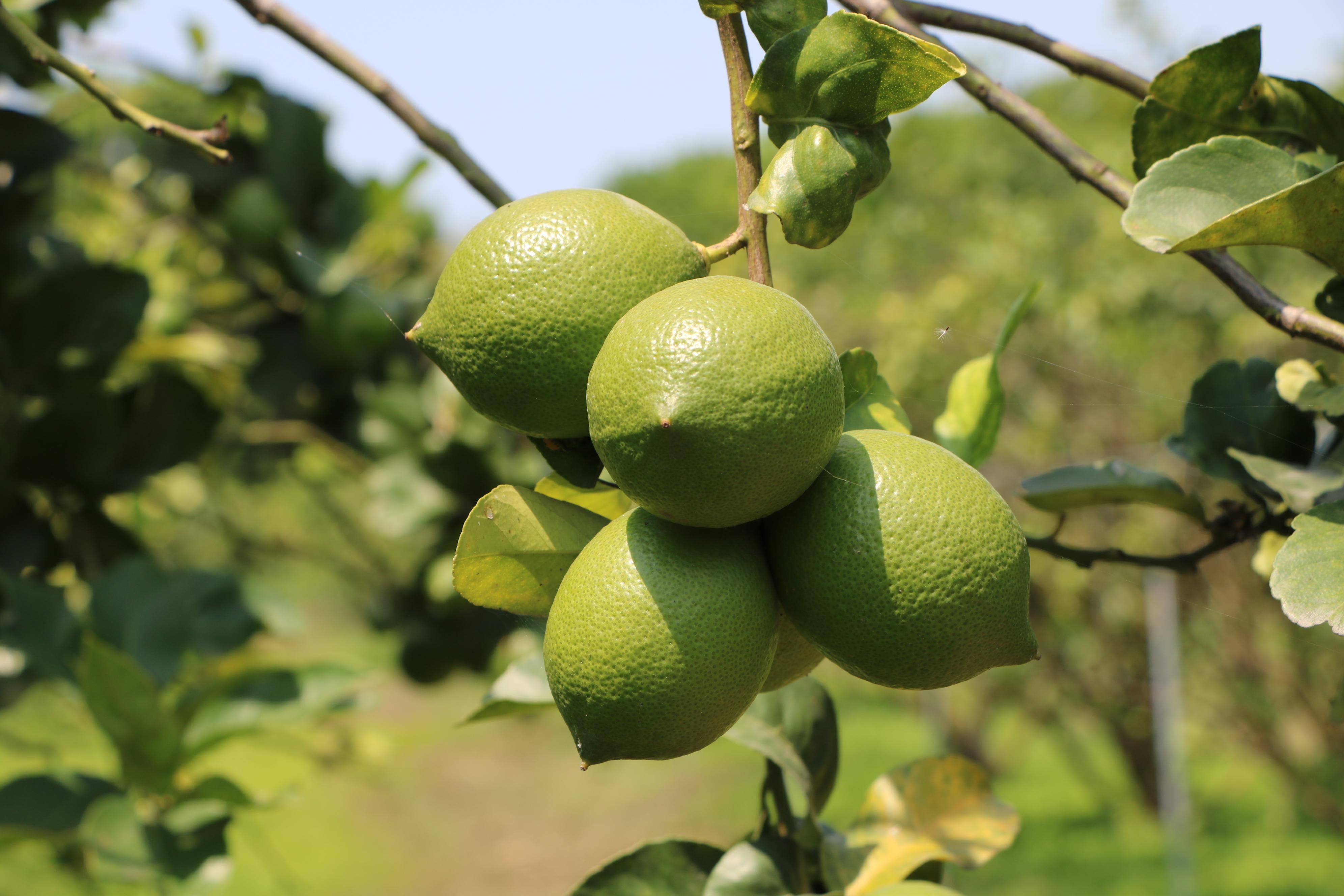 Натуральный Экстракт напиток лимонный сок с оригинальным
